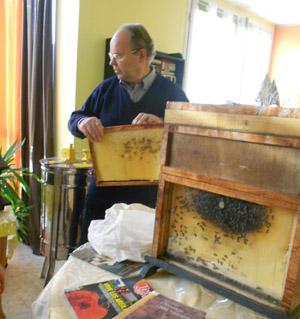 abeilles. Black Bedroom Furniture Sets. Home Design Ideas